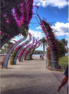 Arbor in South Brisbane- southbank