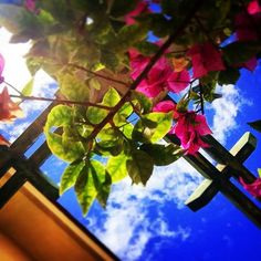 Sotto l'azzurro fitto del cielo.. la delicatezza di un fiore! <3 #instaphoto #nature #flowers #italy #sky #instamoments #vscocam #beautiful #likeit #follower #photooftheday #photography #vscocamphotos #instagram #loveit