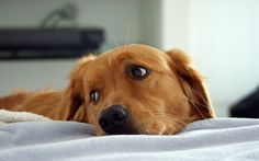 All About Dogs   Download Sad Dog wallpaper for free. To download more Sad Dog ...