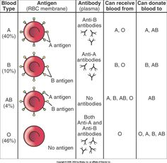 Blood Types Chart  Blood Types Blood And Blood Type Chart