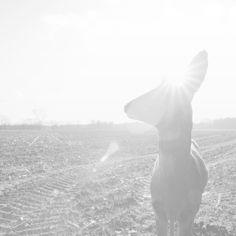 My own Wilderness - Patricia van de Camp