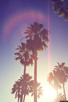 Image via We Heart It https://weheartit.com/entry/137225708/via/7852256 #beach #cute #palmtrees #summer #wallpapers #cutepics