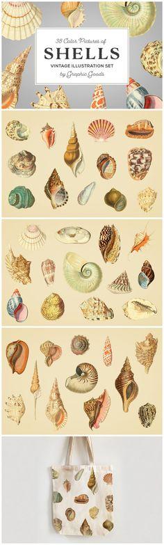 Shells - Vintage Color Illustrations by Graphic Goods Google Drive Logo, Graphic Illustration, Illustrations, Retro Logos, Free Logo, Vintage Colors, Apparel Design, Lightroom Presets, Vintage Inspired