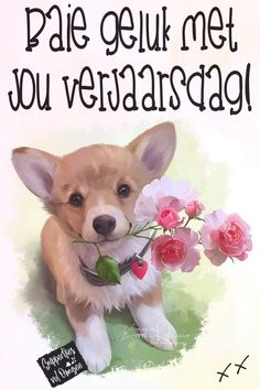 Birthday Messages, Birthday Wishes, Birthday Cards, Special Occasion, Corgi, Birthdays, Meet, Happy, Afrikaans