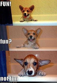 funny-dog-pictures-dog-questions-if-bath-is-fun.jpg