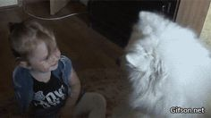 This adorable #dog absolutely loves his human!