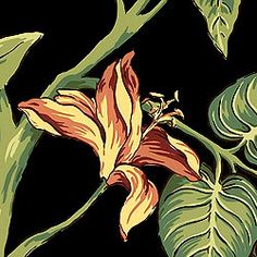 FLORA, Black, T1610, Collection Barbados from Thibaut