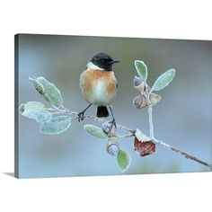 """Canvas On Demand Hard Winter by Andres Miguel Dominguez Photographic Print on Canvas Size: 24"""" H x 36"""" W x 1.25"""" D"""