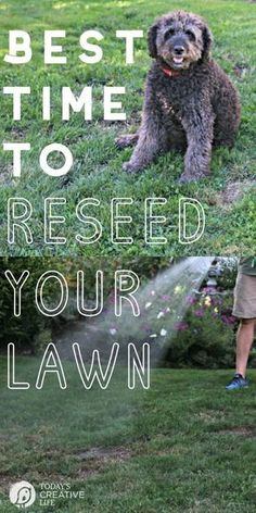Best Time to Reseed your Lawn is part of Fall lawn Care - Best Time to Reseed your Lawn Lawn Care Tips for reseeding your grass Fall & Autumn Lawn Care Tips Grass Seed Tips TodaysCreativeLife com Growing Grass From Seed, Planting Grass Seed, How To Grow Grass, Fall Lawn Care, Lawn Care Tips, Reseeding Lawn, Lawn Repair, Diy Spring, Fall Diy