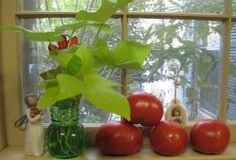"""Dreaming of fresh tomatoes! I took the Tomato Pie Recipes from three friends and combined """"this"""" from one and """"that"""" from another. The Tomato Pie sure was good and. Pie Recipes, Crockpot Recipes, Great Recipes, Favorite Recipes, Summer Pie, Sauteed Vegetables, Veggies, Tomato Pie, Savory Tart"""