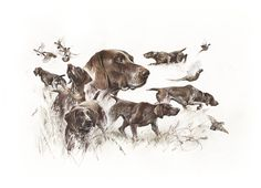 German Shorthaired Pointer Print Hunting with German Shorthaired Pointer, shorthaired pointer, german pointer, german shorthair - Hunting Gifts, Bow Hunting, Hunting Dogs, Hunting Art, Archery Hunting, Pointer Puppies, Pointer Dog, Gsp Puppies, La Reproduction