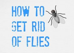 Ultimate Tips For House Fly Control Controlling Flies Inside And Outside Of Your