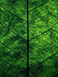 green green leaf