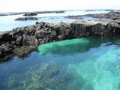 Shore snorkelling at Isla Isabela, Galapagos Galapagos Trip, Galapagos Islands Ecuador, Animal Species, Snorkelling, Archipelago, Travel Goals, Pacific Ocean, South America, Amazing