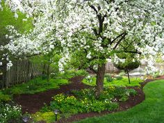Crabapple tree in bloom White Trees, Stepping Stones, Bloom, Backyard, Garden, Outdoor Decor, Plants, Stair Risers, Patio