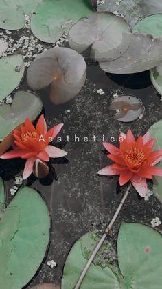 #aesthetic