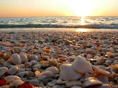 Some Of The Best Sea Shelling Is Found On Johnson Beach