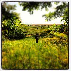 Unser Stueck Land am #Neusiedlersee ~ ich liebe die Aussicht by www.MiSha.at #instagram