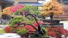 como hacer un bonsai - YouTube