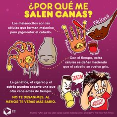 Porque salen Canas? Science Facts, Fun Facts, Little Do You Know, Curious Facts, Medicine Student, Med Student, Interesting Topics, Anatomy And Physiology, Spanish Lessons