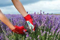 Lavender adds soft beauty to any landscape and has endless medicinal purposes for home use. Find tips to grow lavender in any climate on Gardener's Path. Lavender Pruning, Potted Lavender, Growing Lavender, Lavender Fields, Lavender Care, Lavander, Garden Shrubs, Blue Garden, Gardens