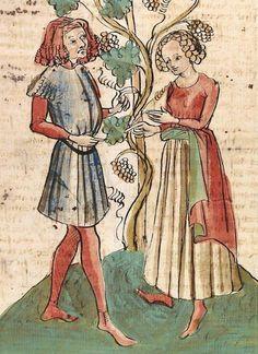 Konrad von Megenberg Das Buch der Natur — Hagenau - Werkstatt Diebold Lauber, um 1442-1448? Cod. Pal. germ. 300 Folio 264r