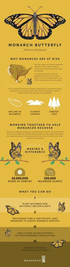 270615a8f9a Monarch butterflies travel very long distances. Since the they have  appeared and started colonies in the Eastern states of Australia and they  are now in ...