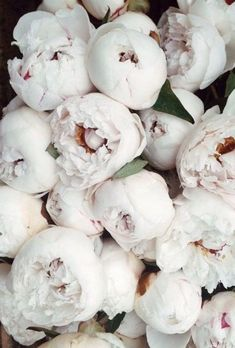 peonies and petals My Flower, Pretty Flowers, Summer Flowers, Beautiful Flowers Wallpapers, White Peonies, Coral Peonies, No Rain, Flower Aesthetic, Flower Wallpaper