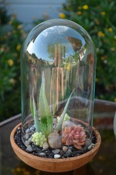 Terrarium, succulent