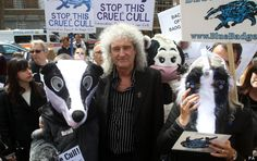badger cull protest in westminster led by brian may - huffington post, 1 june 2013