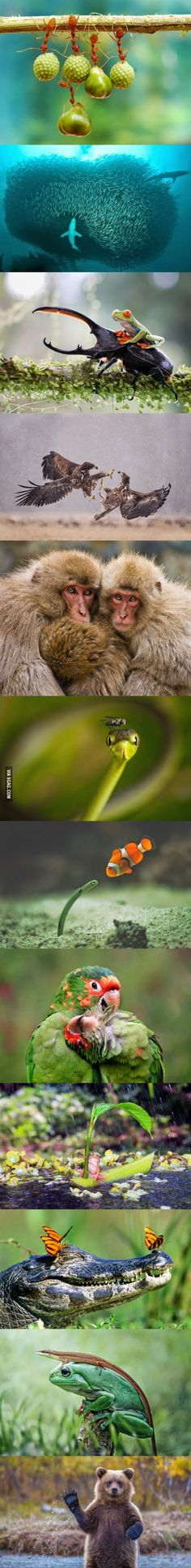 Epic Moments In Nature