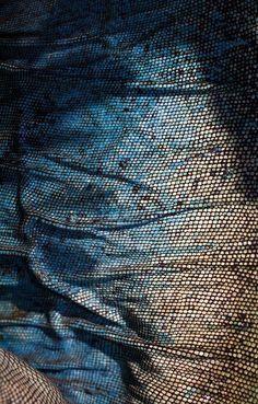 Blue Iguana Skin