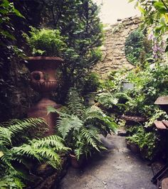 Urban Garden Design Ask the Expert: Design Tips for a Shady Courtyard Garden - Gardenista - For Jack Laver Brister of Tinhouse Home and Garden Antiques, a heavily shaded courtyard that came with the Georgian townhouse he's renovating in Somerset, Small Courtyard Gardens, Small Courtyards, Back Gardens, Small Gardens, Courtyard Design, Patio Design, Patio Gardens, Modern Gardens, Japanese Gardens