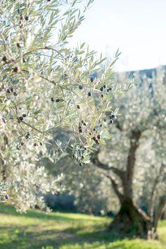 Minty House Blog : Olive Harvest Retreat part 1