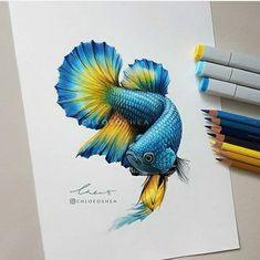 -Betta Fish No. 3 I started drawing fish a few years ago but I've always had trouble with drawing scales because of the complicated… Realistic Pencil Drawings, Fish Drawings, Colorful Drawings, Animal Drawings, Art Drawings, Drawings With Colored Pencils, Fish Pencil Drawing, Beta Fish Drawing, Drawn Fish