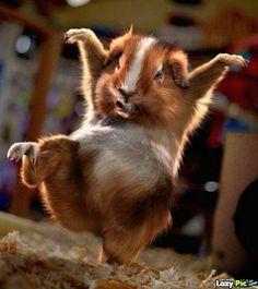 Dancersdancing Animals Cute Animals Baby Animals Funny Animals Animal Babies