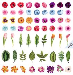 DIY Flower Pack Vol.1 - Illustrations - 2. Cute Watercolor / Hand Drawn Flower Clip Art Design