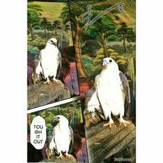 Burung kk tua @wbL