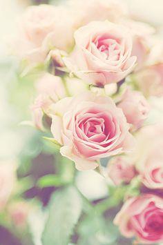 flowers soft tones