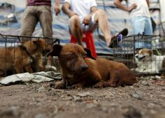 Dogs for sale are seen in Dashichang dog market ahead of a local dog meat festival in Yulin, Guangxi Autonomous Region, China June 21, 2015. In the market, some dogs are sold as pets, while others are sold for dog meat. Local residents in Yulin host small gatherings to consume dog meat and lychees in celebration of the summer solstice which marks the coming of the hottest days for the festival, which this year falls on Monday. REUTERS/Kim Kyung-Hoon