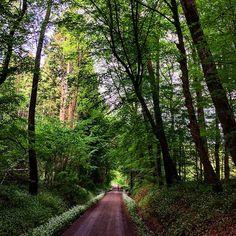 Marlenes choice today... :-) #marlenebitzer #märchenwald