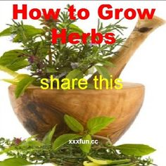 How to Grow your own culinary herbs