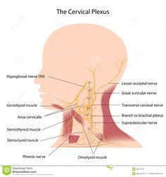 Cervical Grid