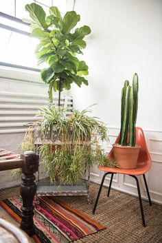 Never have too many plants + rugs | Patina