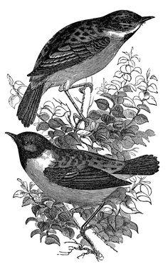 *The Graphics Fairy LLC*: Vintage Clip Art - Birds and Nest Engravings Vintage Birds, Vintage Images, Vintage Prints, Vintage Clip, Graphics Fairy, Free Graphics, Black And White Birds, 8bit Art, Digital Stamps