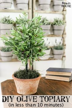 DIY Olive Topiary Tr