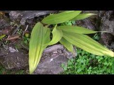 ▶ Cultivando orquídeas Parte 5: Temperatura y Humedad. - YouTube