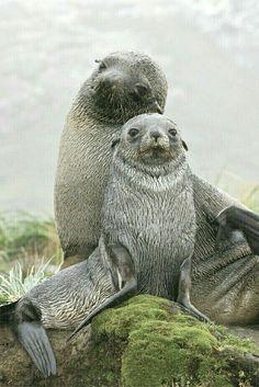 Green Ocean, Green Beach, Garden Animals, Salt And Water, Beach Cottages, Cute Photos, Sea Creatures, Beautiful Images, Underwater