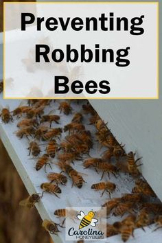 Honey bees are all little beggars and thieves when the opportunity presents itself. It is about survival of the fitness in the insect world. Robbing bees can destroy weak hives. Here are some ideas on how to prevent this problem. Hives And Honey, Honey Bees, Raising Bees, Raising Ducks, Bee Facts, Bee Hive Plans, Beekeeping For Beginners, Buzzy Bee, Backyard Beekeeping