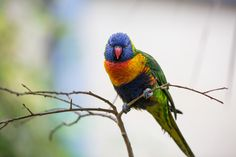 """https://flic.kr/p/ToeW3A 